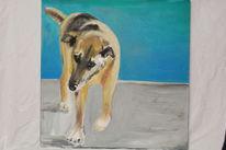 Sommer, Hund, Blau, Malerei