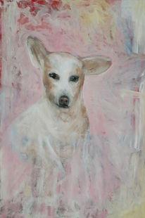 Weiß, Hund, Augen, Rosa