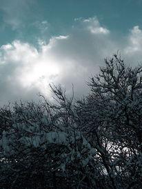 Dunkel, Fotografie, Baum, Kahl