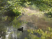 Wasser, Fluss, Pflanzen, Nebel