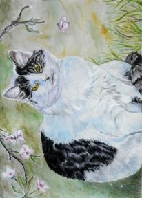 Haustier, Frühling, Kirschblüte, Katze