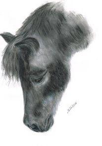 Natur, Tierportrait, Pony, Charakter