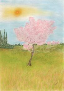 Pastellmalerei, Japanische kirsche, Zeichnung, Frühling