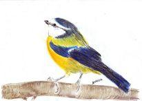 Tierzeichnung, Vogel, Szene, Finken