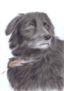 Hund, Tiere, Tierportrait, Pastellmalerei