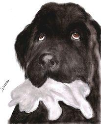 Hundeportrait, Nach photo, Pastellmalerei, Neufundländer