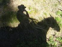 Pferde, Schatten, Sommer, Western