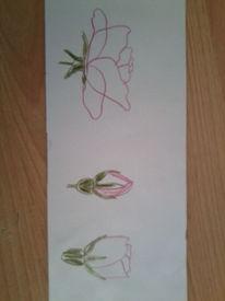 Skizze rose, Zeichnungen