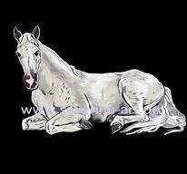 Reiten, Tiere, Liegen, Pferde