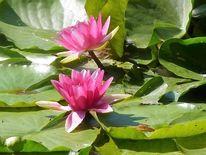 Blüte, Wasser, See, Farben