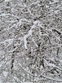 Baum, Äste, Winter, Schnee