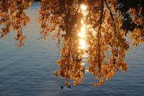 Blätter, Herbst, See, Baum