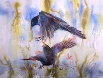 Vogel, Amsel, Aquarellmalerei, Streit