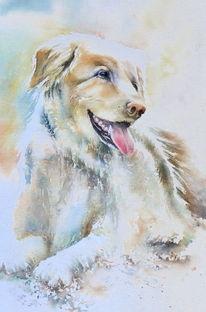 Hund, Aquarellmalerei, Souldog, Tiere