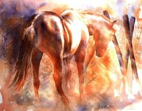 Pferde, Aquarellmalerei, Eingesperrt, Tiere