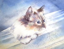 Aquarellmalerei, Katze, Tiere, Haustier