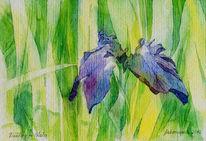 Blumen, Aquarellmalerei, Schwertlilie, Wal