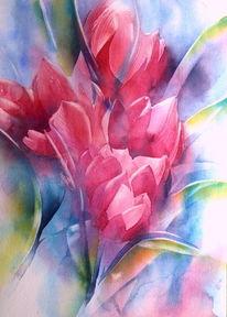 Aquarellmalerei, Blumen, Rot, Frühling