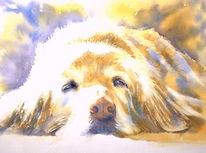 Portrait, Hund, Aquarellmalerei, Hundeaugen