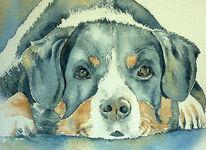 Sennenhund, Aquarellmalerei, Appenzeller sennenhund, Portrait