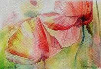 Blumen, Aquarellmalerei, Gegenlicht, Mohn