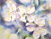 Aquarellmalerei, Blüte, Kirsche, Kirschblüte