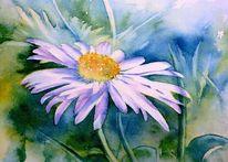 Aquarellmalerei, Blumen, Margerite, Aquarell