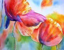 Rot, Aquarellmalerei, Mohnlicht, Blumen