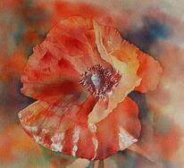 Blumen, Aquarellmalerei, Rot, Mohnblüten