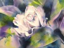 Blumen, New dawn, Aquarellmalerei, Rose