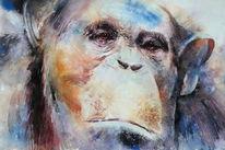 Schimpanse, Menschenaffen, Tiere, Aquarellmalerei