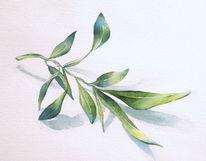Pflanzen, Aquarellmalerei, Olivenzweig, Aquarell