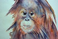 Orang utan, Aquarellmalerei, Tiere, Menschenaffen