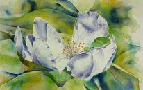 Blüte, Aquarellmalerei, Quittenblüte, Quitten