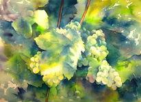 Rebe, Aquarellmalerei, Scheurebe, Weintrauben