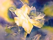 Weiß, Aquarellmalerei, Rose, Blumen