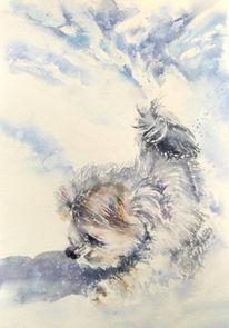 Aussie, Aquarellmalerei, Portrait, Hund