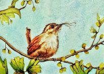 Vogel, Zaunkönig, Nest, Frühling