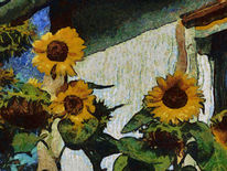 Sonneblumen, Sommer, Elsass, Blumen