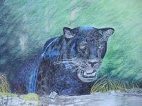 Buntstiftzeichnung, Natur, Panther, Schwarz