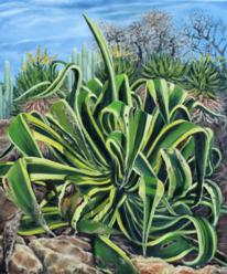 Pflanzen, Kaktus, Agaven, Grün