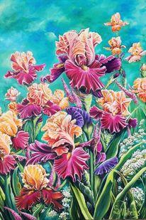Schwertlilie, Garten, Blüte, Bartiris