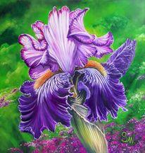 Iris, Pflanzen, Blau, Violett