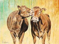 Kuh, Kuhkuss, Braune kühe, Bauernhof