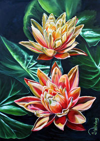 Seerosen, Blumen, Nympaea, Blätter