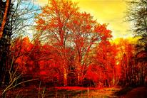 Digitale kunst, Wald, Baum, Rot