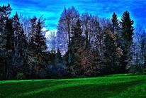Atmosphäre, Digital, Blau, Baum