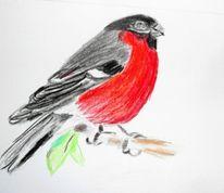 Zeichnung, Dompfaff, Vogel, Rot schwarz