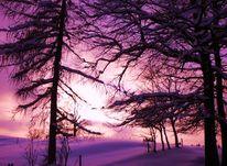 Stille, Berührung, Baum, Schnee