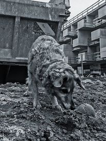 Tiere, Ausdruck, Fotografie, Gesellschaft